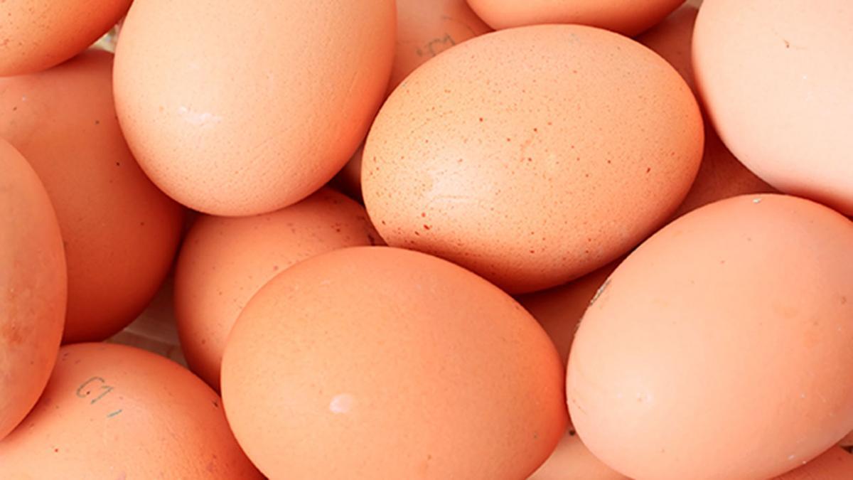 Køleskab udenfor kogte holdbarhed æg Fryse æg?