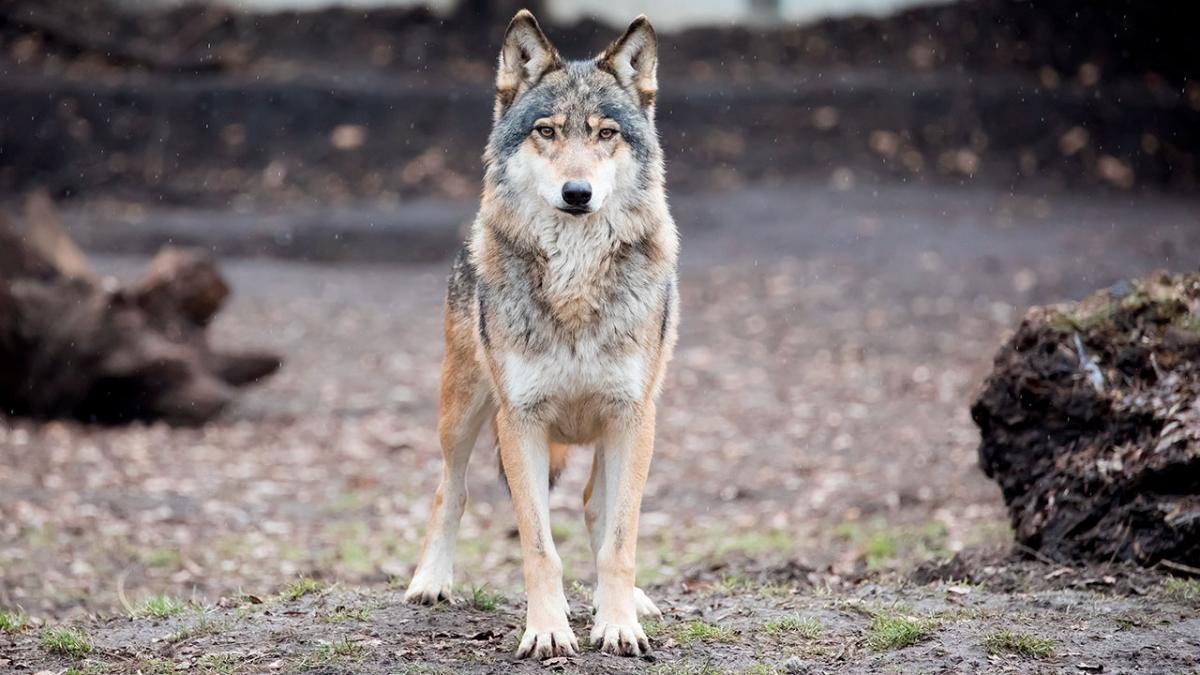 Mød 10 af Danmarks truede pattedyr