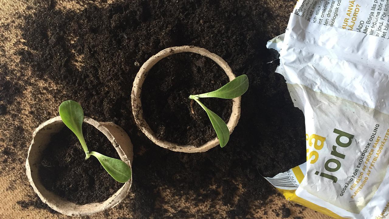 038e5d0ce 7 slags jord: Find den bedste jord til omplantning og til havens ...