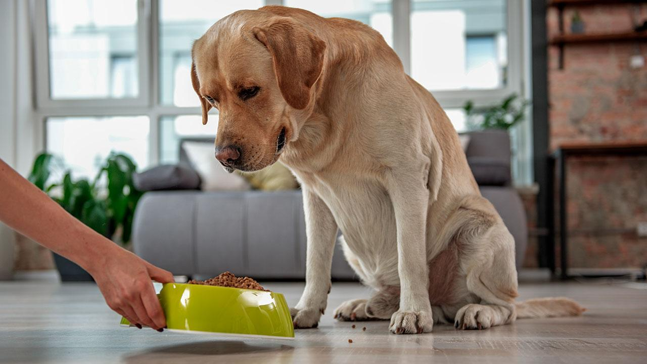 hjemmelavet hundemad opskrift
