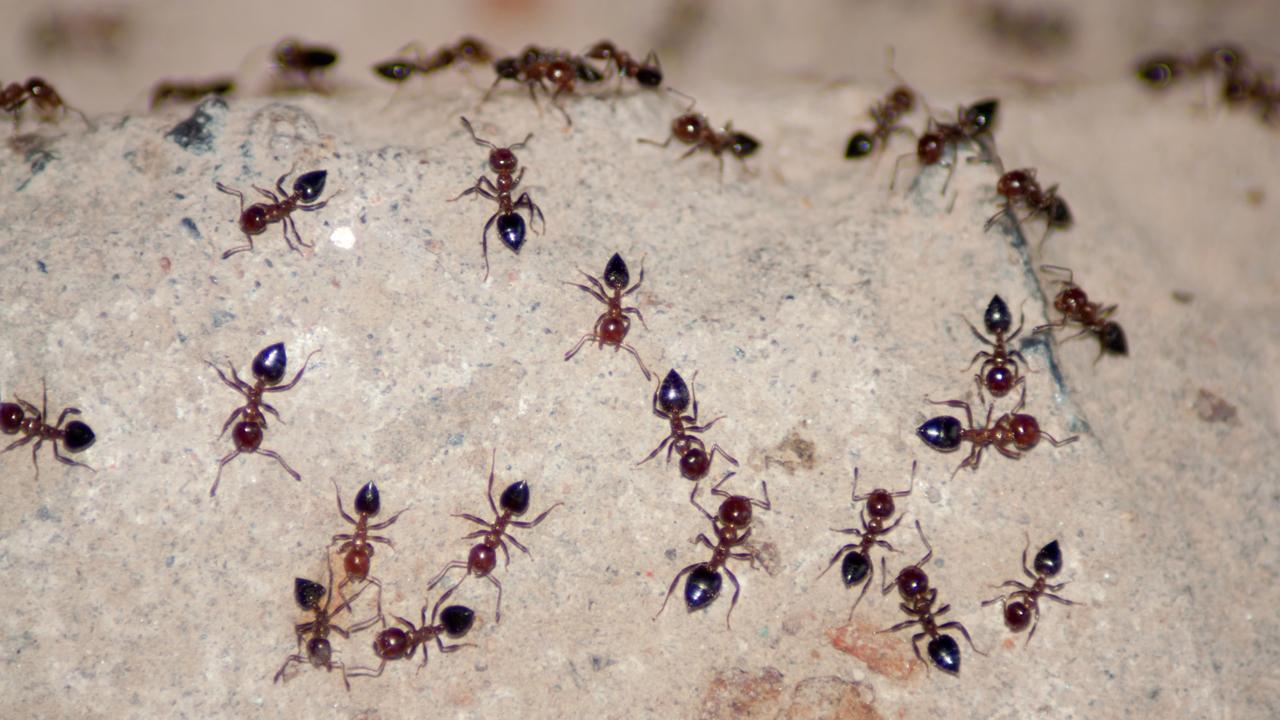 hvordan slipper man af med myrer