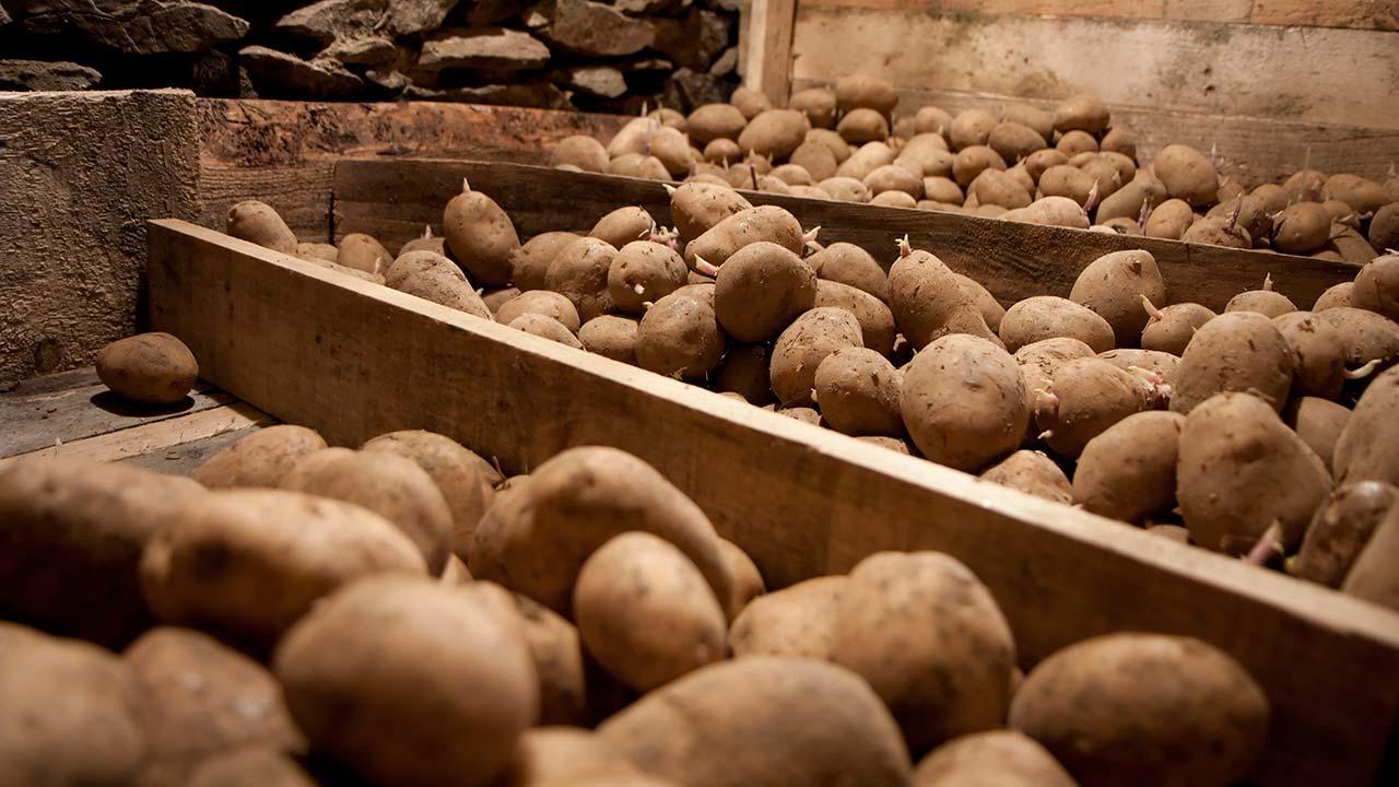 skrællede kartofler holdbarhed
