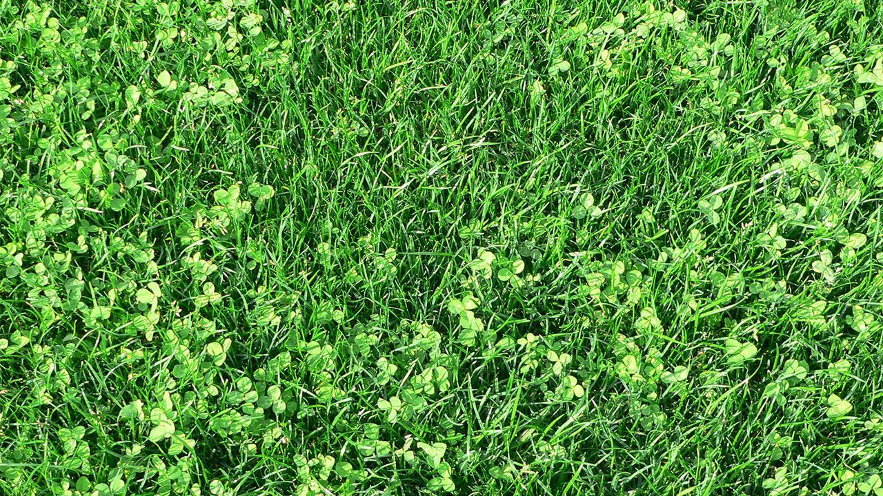 hundetis på græsplænen