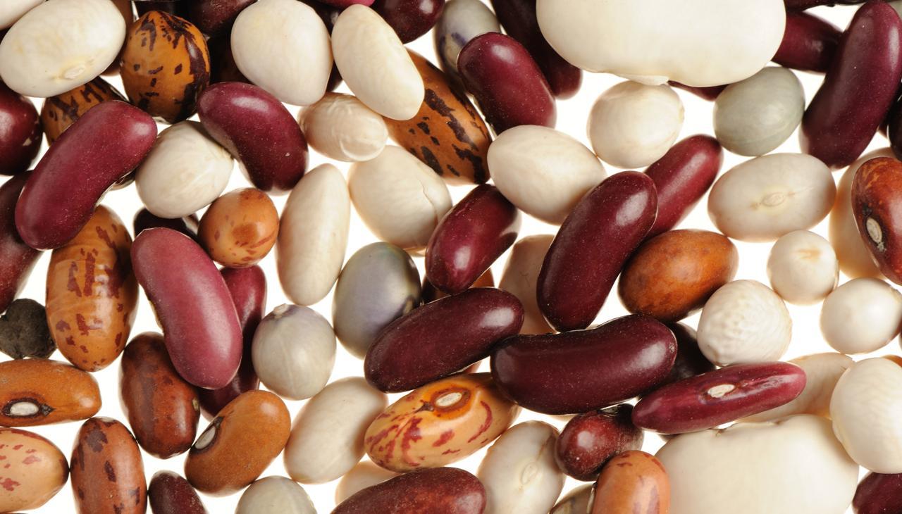 Moderne Proteiner mætter og slanker | Samvirke HR-19